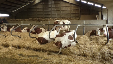 Bedding Lien vers: DairyCowBedding