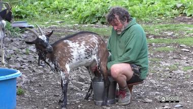 Milking Lien vers: DairyGoatMilking